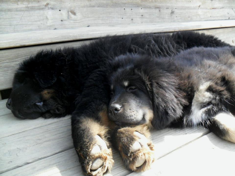pupsleep